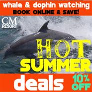 10:00 AM Dolphin Watch Hot Summer Deals
