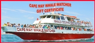 Cape May Whale Watcher Gift Certificates