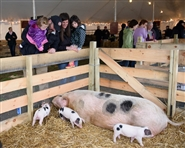 Baby Animals: Heritage Breeds at the Banke, Apr 20-28