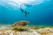 Tugboat & Turtle Snorkel Adventure Tour