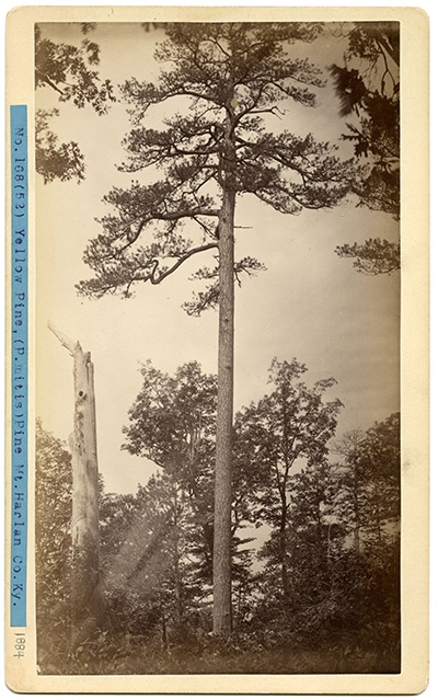 Filson Friday - Under The Lonesome Pine: An Author and an Entrepreneur in Appalachia's Changing Landscape